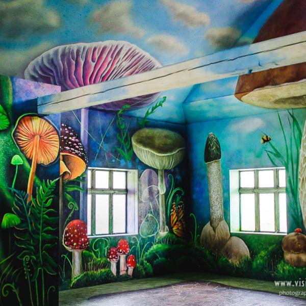 Музей грибів, Ільці